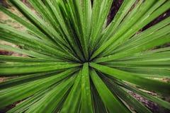 Πράσινα φρέσκα υγρά φύλλα φυτών με τις πτώσεις νερού Καθαρή φωτογραφία έννοιας φρεσκάδας ομορφιάς στοκ εικόνες