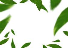 Πράσινα φρέσκα φύλλα δέντρων άνοιξη πετώντας πέρα από το άσπρο υπόβαθρο διανυσματική απεικόνιση