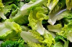 Πράσινα φρέσκα φύλλα σαλάτας Στοκ Εικόνες