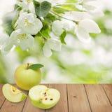 Πράσινα φρούτα της Apple με τα φύλλα και τα λουλούδια Στοκ Εικόνα