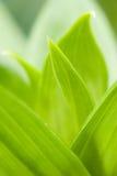 πράσινα φυλλώδη Στοκ φωτογραφίες με δικαίωμα ελεύθερης χρήσης