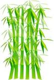 πράσινα φυτά μπαμπού Ελεύθερη απεικόνιση δικαιώματος