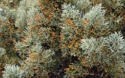 πράσινα φυτά Υπόβαθρο ομοιόμορφου πράσινου Στοκ φωτογραφίες με δικαίωμα ελεύθερης χρήσης
