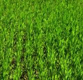 πράσινα φυτά Στοκ φωτογραφίες με δικαίωμα ελεύθερης χρήσης