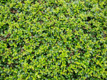 πράσινα φυτά στοκ εικόνες με δικαίωμα ελεύθερης χρήσης