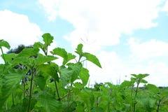 πράσινα φυτά Στοκ φωτογραφία με δικαίωμα ελεύθερης χρήσης