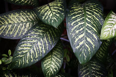 πράσινα φυτά στοκ φωτογραφία