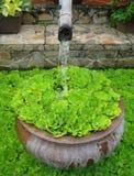 πράσινα φυτά Στοκ Εικόνες