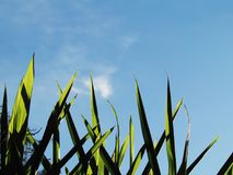 Πράσινα φύλλα αναδρομικά φωτισμένα ενάντια στον ουρανό Στοκ Φωτογραφίες