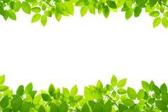 πράσινα φύλλα ανασκόπησης στοκ φωτογραφίες με δικαίωμα ελεύθερης χρήσης