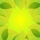πράσινα φύλλα ανασκόπησης Στοκ εικόνα με δικαίωμα ελεύθερης χρήσης