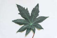 Πράσινα φύλλα ελάχιστα στο άσπρο υπόβαθρο στοκ φωτογραφία με δικαίωμα ελεύθερης χρήσης