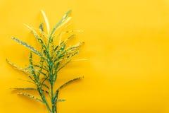 Πράσινα φύλλα ελάχιστα στο κίτρινο υπόβαθρο στοκ φωτογραφία