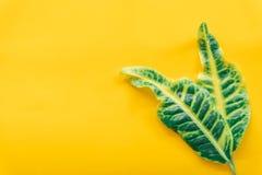 Πράσινα φύλλα ελάχιστα στο κίτρινο υπόβαθρο στοκ εικόνες με δικαίωμα ελεύθερης χρήσης