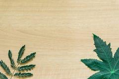 Πράσινα φύλλα ελάχιστα στο ξύλινο υπόβαθρο στοκ εικόνες