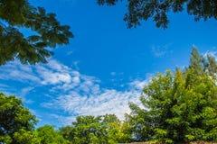 Πράσινα φύλλα και κίτρινο πλαίσιο λουλουδιών με το υπόβαθρο μπλε ουρανού και το διάστημα αντιγράφων Πλαίσιο φύσης των πράσινων κλ Στοκ φωτογραφία με δικαίωμα ελεύθερης χρήσης