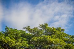 Πράσινα φύλλα και κόκκινο πλαίσιο λουλουδιών με το υπόβαθρο μπλε ουρανού και Στοκ Φωτογραφίες