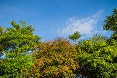 Πράσινα φύλλα και κόκκινο πλαίσιο λουλουδιών με το υπόβαθρο μπλε ουρανού και Στοκ Εικόνα