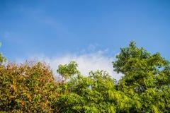 Πράσινα φύλλα και κόκκινο πλαίσιο λουλουδιών με το υπόβαθρο μπλε ουρανού και Στοκ Φωτογραφία