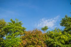 Πράσινα φύλλα και κόκκινο πλαίσιο λουλουδιών με το υπόβαθρο μπλε ουρανού και Στοκ εικόνα με δικαίωμα ελεύθερης χρήσης
