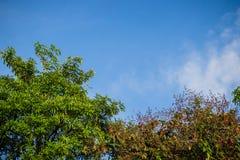 Πράσινα φύλλα και κόκκινο πλαίσιο λουλουδιών με το υπόβαθρο μπλε ουρανού και Στοκ Εικόνες