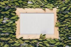 Πράσινα φύλλα και ξύλινο υπόβαθρο πλαισίων στοκ φωτογραφίες με δικαίωμα ελεύθερης χρήσης