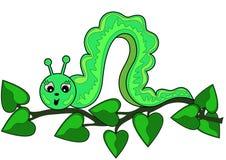 πράσινα φύλλα καμπιών κλάδω& Στοκ εικόνα με δικαίωμα ελεύθερης χρήσης