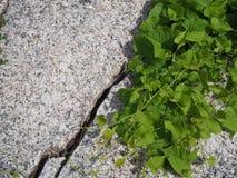 Πράσινα φύλλα κατά μήκος του βράχου στοκ εικόνα