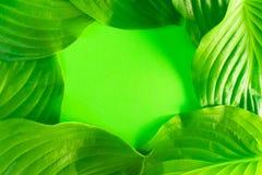 Πράσινα φύλλα με μια θέση για το διάστημα αντιγράφων στη μέση στοκ φωτογραφίες