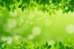 Πράσινα φύλλα με το πράσινο μουτζουρωμένο υπόβαθρο στοκ φωτογραφίες