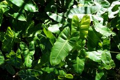 Πράσινα φύλλα με το φως του ήλιου ως υπόβαθρο στο δάσος Στοκ εικόνες με δικαίωμα ελεύθερης χρήσης