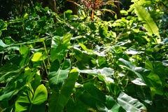 Πράσινα φύλλα με το φως του ήλιου ως υπόβαθρο στο δάσος Στοκ Φωτογραφία