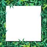 Πράσινα φύλλα μπαμπού με το άσπρο τετραγωνικό έγγραφο, απεικόνιση υπο διανυσματική απεικόνιση