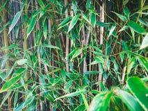 πράσινα φύλλα πλαισίων μπαμ& Στοκ Φωτογραφία