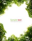 πράσινα φύλλα πλαισίων Στοκ Εικόνα