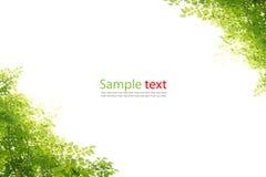 πράσινα φύλλα πλαισίων Στοκ εικόνες με δικαίωμα ελεύθερης χρήσης