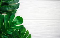 Πράσινα φύλλα σε ένα ξύλινο άσπρο υπόβαθρο Στοκ Εικόνες