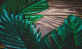 Πράσινα φύλλα σε ένα ξύλινο καφετί υπόβαθρο Στοκ Φωτογραφία