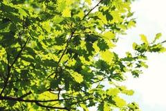 Πράσινα φύλλα στην ανασκόπηση ουρανού Στοκ Φωτογραφίες