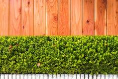 Πράσινα φύλλα στην ξύλινη ανασκόπηση σύστασης Στοκ Εικόνες