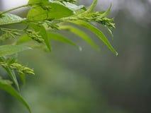 Πράσινα φύλλα στη βροχή Στοκ εικόνα με δικαίωμα ελεύθερης χρήσης