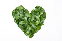 Πράσινα φύλλα στη μορφή καρδιών στο άσπρο υπόβαθρο Στοκ Εικόνες