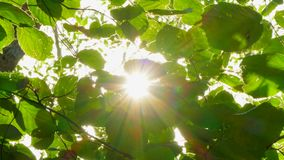 Πράσινα φύλλα στον αέρα απόθεμα βίντεο