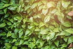 Πράσινα φύλλα στον τοίχο Στοκ εικόνα με δικαίωμα ελεύθερης χρήσης