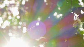 Πράσινα φύλλα στο μαλακό φως του ήλιου φιλμ μικρού μήκους