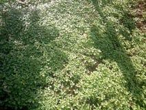 Πράσινα φύλλα στο υπόβαθρο δοχείων στοκ εικόνες με δικαίωμα ελεύθερης χρήσης