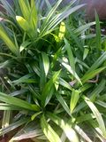 Πράσινα φύλλα στο υπόβαθρο δοχείων στοκ φωτογραφία με δικαίωμα ελεύθερης χρήσης