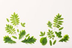 Πράσινα φύλλα στο υπόβαθρο εγγράφου Στοκ εικόνες με δικαίωμα ελεύθερης χρήσης