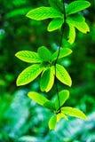 Πράσινα φύλλα στο φυσικό κήπο Στοκ Φωτογραφία