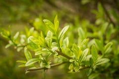 Πράσινα φύλλα στο φωτεινό ήλιο Στοκ Φωτογραφίες